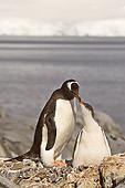 BRD 05 SM0059 01