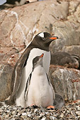 BRD 05 SM0061 01