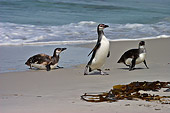 BRD 05 SM0072 01