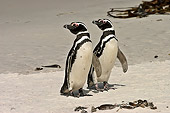BRD 05 SM0073 01