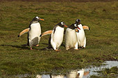 BRD 05 SM0076 01