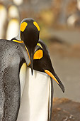 BRD 05 SM0084 01