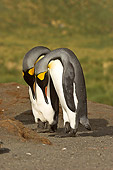 BRD 05 SM0085 01
