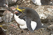 BRD 05 SM0088 01