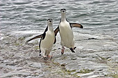 BRD 05 SM0095 01