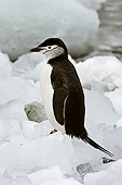 BRD 05 SM0096 01