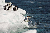 BRD 05 SM0104 01