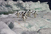 BRD 05 SM0105 01