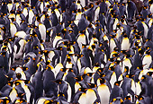 BRD 05 TL0004 01