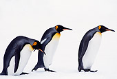 BRD 05 TL0007 01