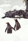 BRD 05 TL0017 01