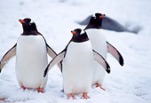 BRD 05 TL0018 01