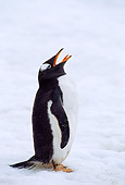 BRD 05 TL0019 01