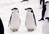 BRD 05 TL0020 01