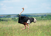 BRD 06 GL0001 01