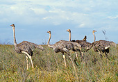 BRD 06 GL0004 01