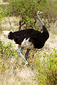 BRD 06 MC0001 01