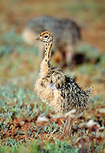 BRD 06 MH0006 01