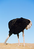BRD 06 RK0003 04