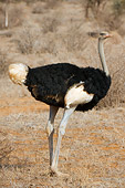 BRD 06 NE0005 01