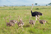 BRD 06 NE0007 01