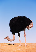 BRD 06 RK0001 07