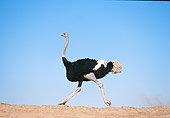 BRD 06 RK0008 07