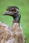 BRD 06 RK0016 01