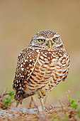 BRD 07 AC0027 01