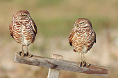 BRD 07 AC0028 01