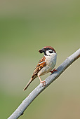 BRD 07 AC0030 01