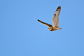 BRD 07 AC0032 01