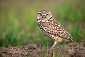 BRD 07 AC0035 01