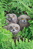 BRD 07 AC0036 01