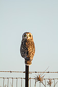 BRD 07 DA0007 01