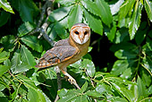 BRD 07 GL0005 01