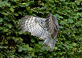 BRD 07 GL0010 01
