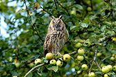 BRD 07 GL0015 01