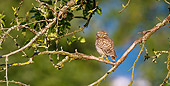 BRD 07 KH0004 01