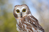 BRD 07 LS0009 01