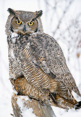 BRD 07 MC0001 01