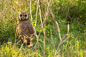 BRD 07 MC0005 01