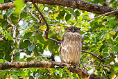 BRD 07 MC0008 01