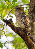 BRD 07 MC0009 01