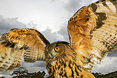 BRD 07 MH0003 01