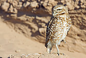 BRD 07 RF0016 01