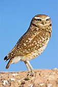 BRD 07 RF0017 01