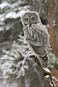 BRD 07 RF0024 01