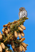 BRD 07 RF0030 01