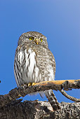BRD 07 RF0032 01